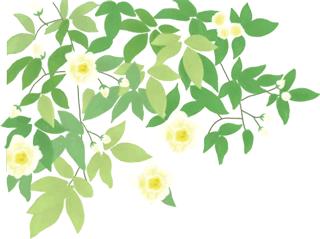 """放轻松,""""森""""呼吸!共青森林公园内万紫千红斗芳菲,请你在线坠入奇幻""""绿野""""梦,感受杨浦清新!"""