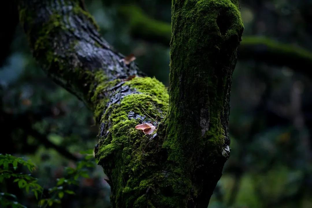 春日里万物骀荡着风雨   草木青葱,百花盛开   多少人只看到了繁华的春色   花石小路,廊檐,老树上   都长满了喜人的青苔   或深或浅,或浓或淡