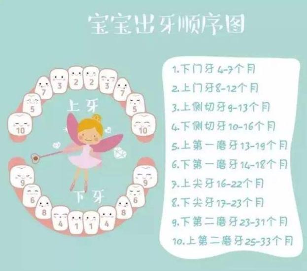 宝宝出牙的征兆、时间、顺序分别是怎样的?家长要如何护理?