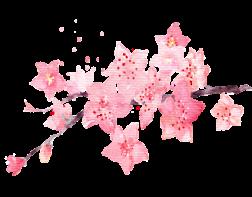 【微·生活】快来云赏花,武汉的樱花开了~