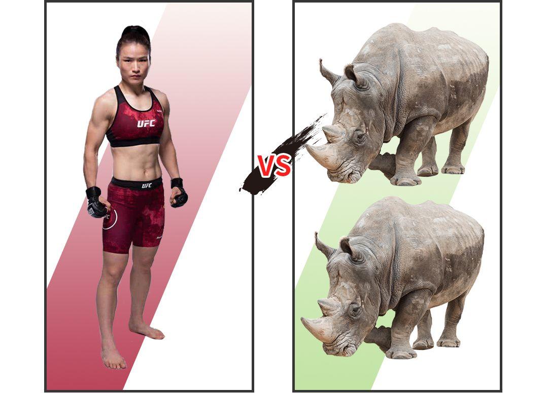 张伟丽 VS 犀牛