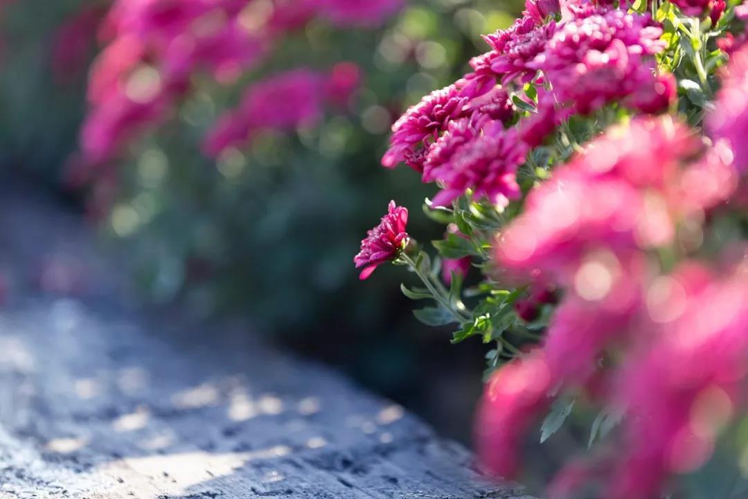 """明天起,""""大运""""降临,财运乐开花,9月步入上坡路,10月天天开口笑"""