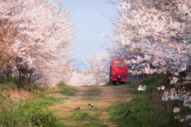 20个国内春天赏花最美的旅行地,你去过几个了?