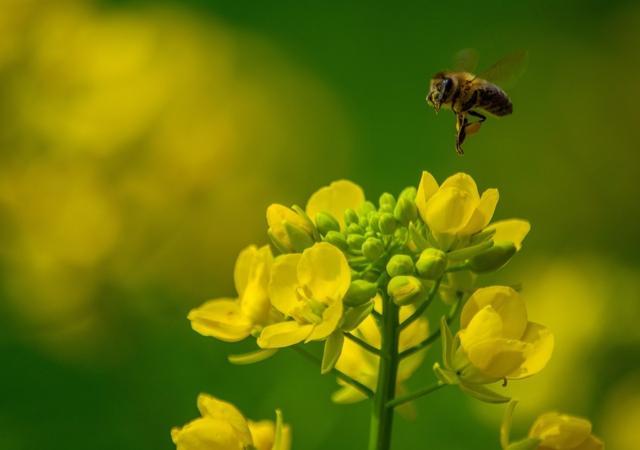 <b>春暖花开,你有花粉过敏症吗?</b>