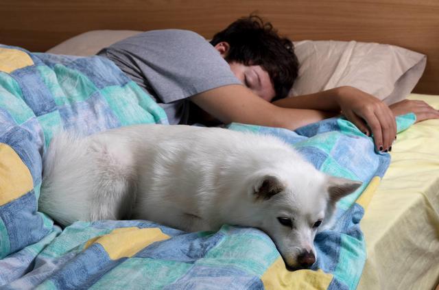 """狗狗有这几种表现,就说明你在它心里,是最亲近的""""妈妈"""""""