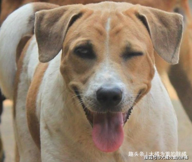 狗狗@11张笑容满面的幸福狗狗照给你暖暖心!,笑开花的狗狗们真可爱