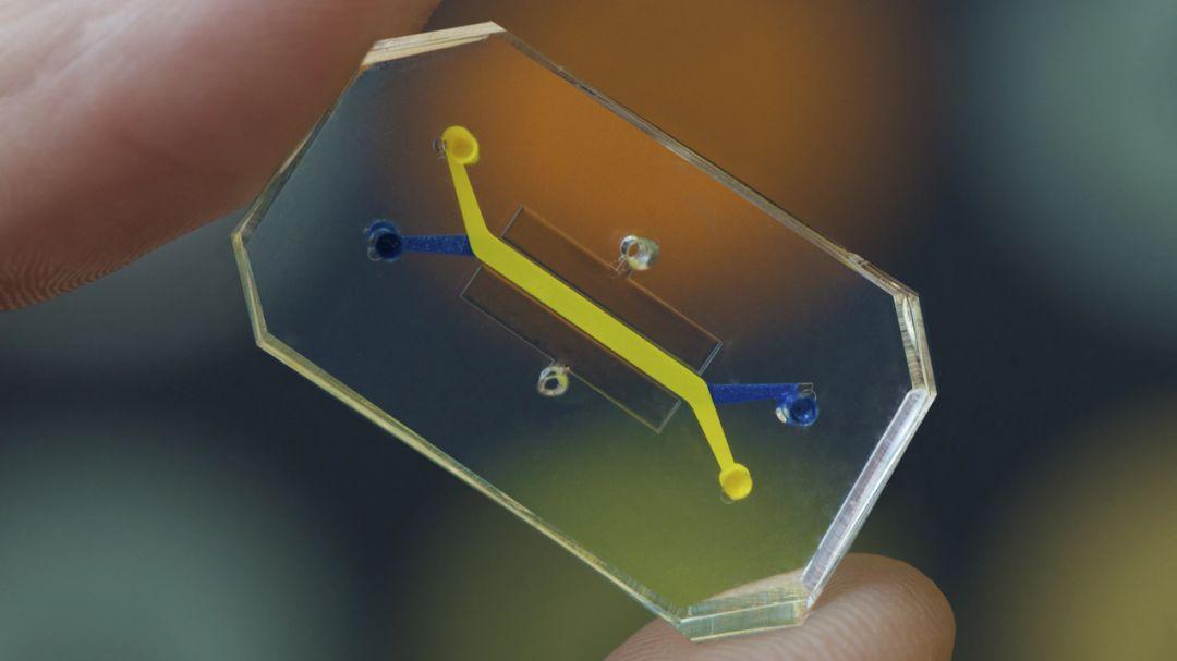 """摁下快進鍵:芯片上打造的""""人體器官"""",正孵化出藥物研發的新興實驗場"""