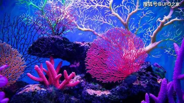 第六次生命大滅絕預兆!珊瑚中已發現最后一次生命大滅絕災難特征