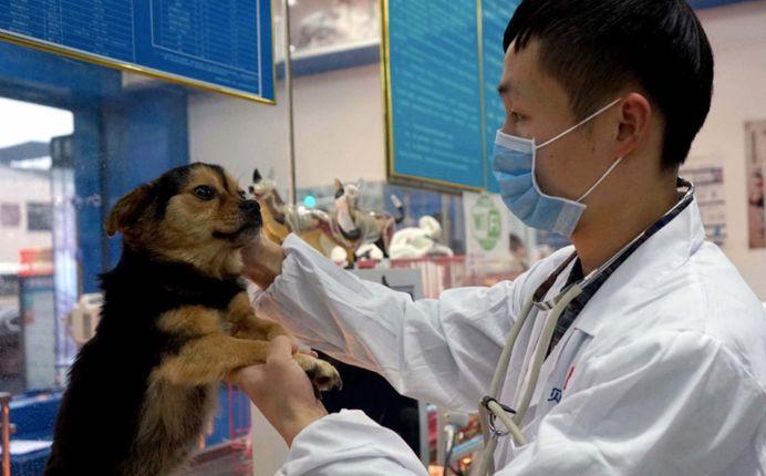 動物倫理缺失暴露社會心理之患