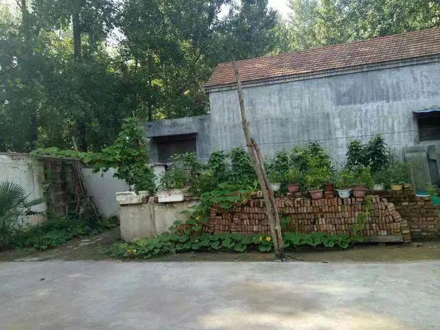 结束租房生活,回到农村的感觉真好,晒晒我家600平的农家小院