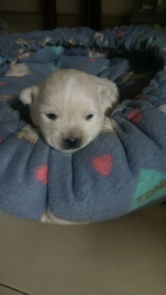 原创 小奶狗跑去店里取暖和,还没过两天好日子,小家伙又漂泊在陌头