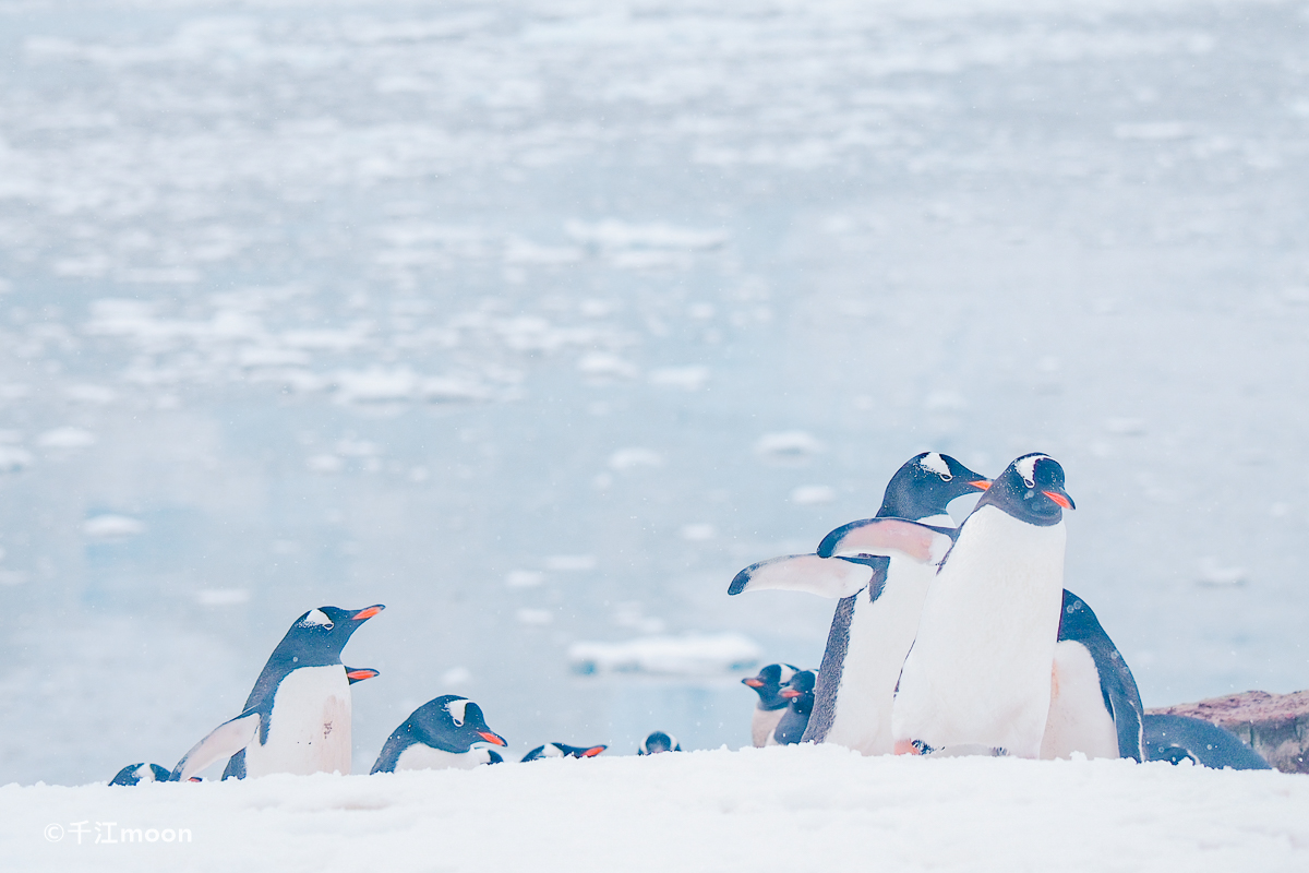 冰雪南极最有活力的风景线