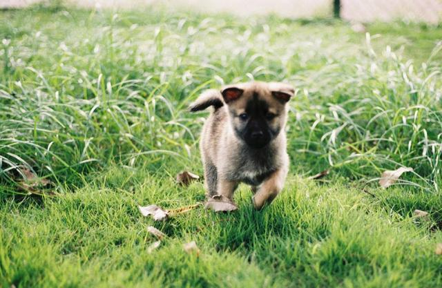原创 草坪上捡到两只小奶狗,女孩带它们回家后,被老妈气到无话可说