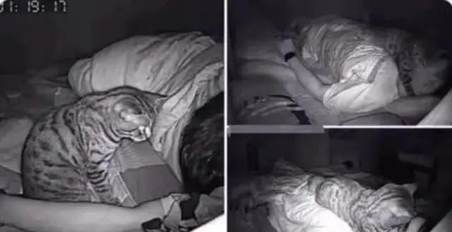 """恒耀平台注册_这只猫被网友称为""""恶魔"""", 因为夜间摄像头揭露了猫的所做所为"""