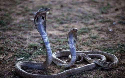 人类为何对蛇有恐惧?可能远古时期就形成了