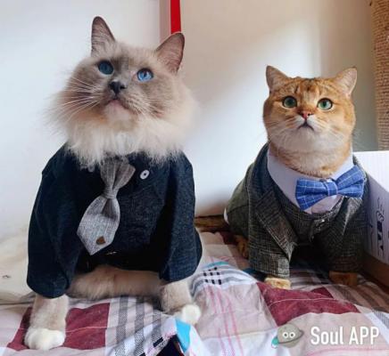 Soul里的这两只时尚猫,给了我一周的穿搭灵感!