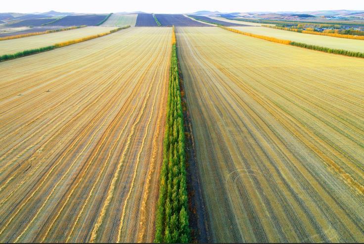 农业农村部:我国启动实施东北黑土地保护性耕作行动计划