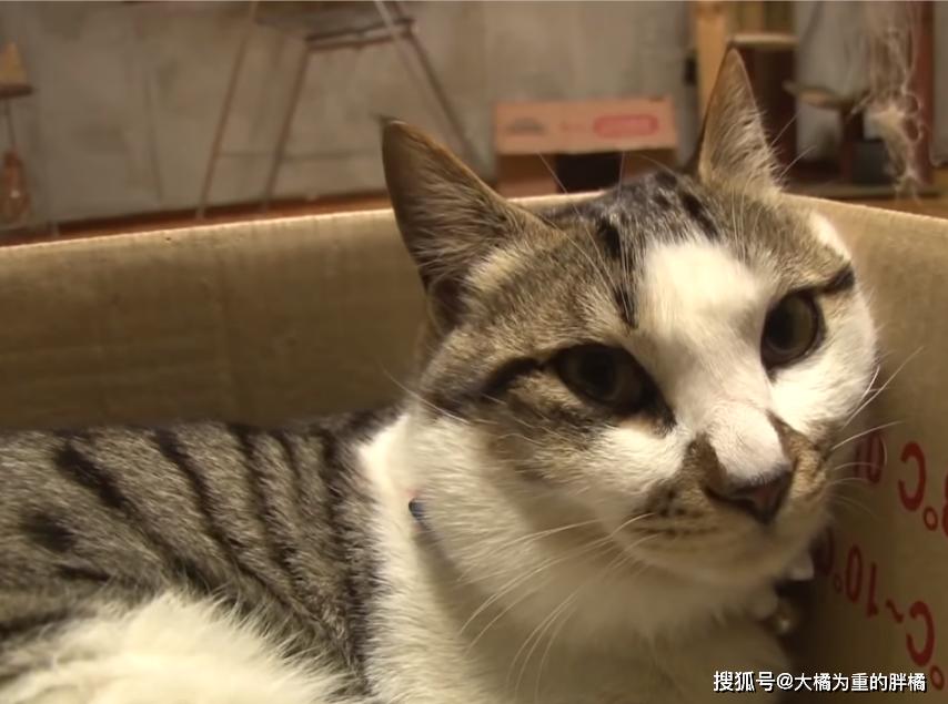 """原创 公猫经心给落难小猫""""喂奶"""",被主人阻止还不愿意,这算母爱么?"""