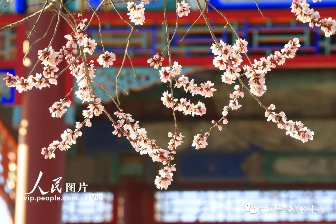 北京颐和园:桃花碧水染西堤