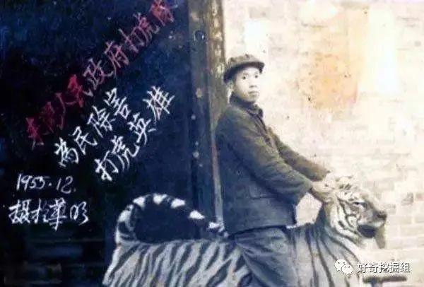 """湖南人民打虎记:用机枪扫射老虎,""""百虎围村""""三天三夜"""