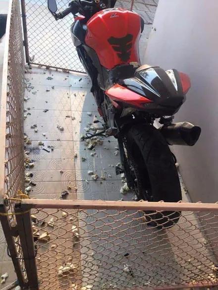 [关二哈]结果被二哈发现后,铲屎官崩溃了!,网友重金买了辆摩托车