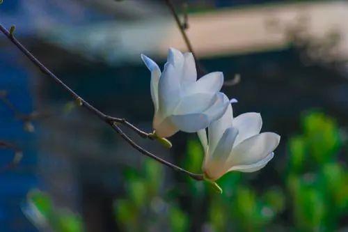 今日春分 万物生长,草长莺飞