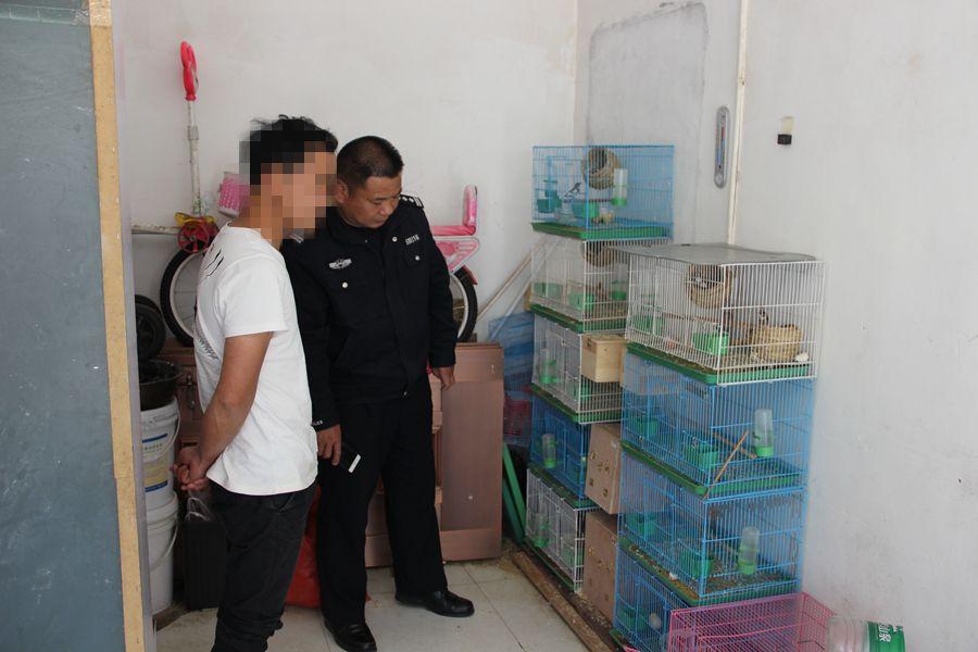 昆明一男子收购3只鹦鹉被逮捕,律师称若人工驯养应从宽