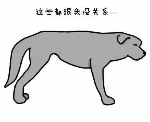 """它用尾巴跟你""""语言"""",你能听懂它说什么吗?"""