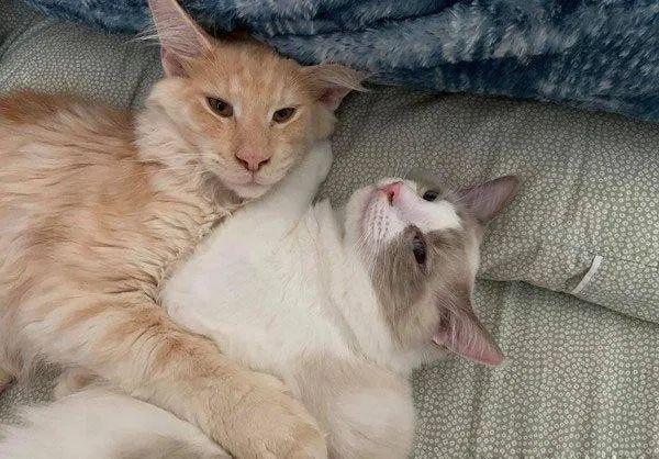 """猫不会埋砂,上完茅厕垃圾桶和地板""""很受伤"""",同伴无奈""""代庖"""""""