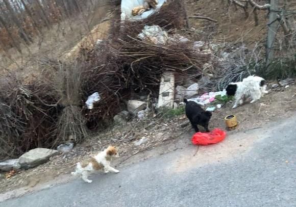"""原创 在村里看到几只流浪狗,它们正在""""围攻""""一个袋子,能吃么"""