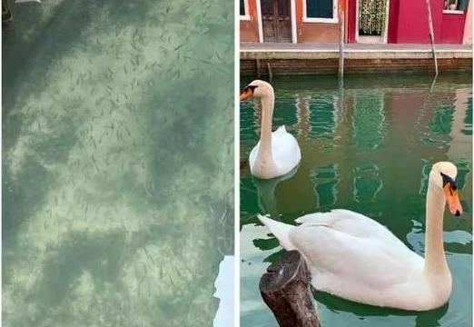 封城后大自然的转变:威尼斯水清澈见底,市中心流浪狗集群