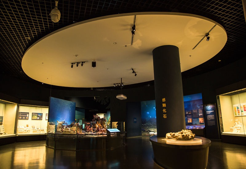 天津自然博物馆开馆_保持一级响应的京津冀地区,博物馆已陆续开放_防控