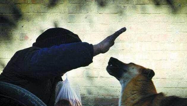 """再生气,也不要用这5个方式""""责罚""""狗狗,可能会要了它的命"""