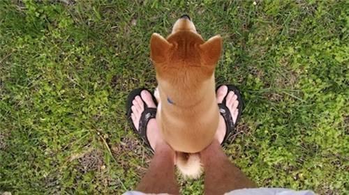 狗狗有这6个显示,解释它的占有欲是异常强的!