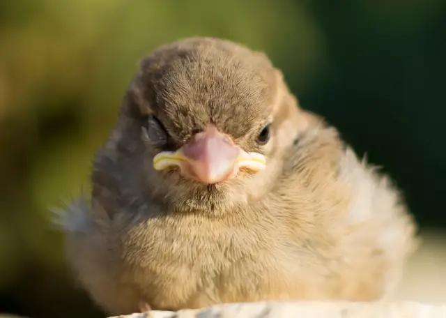 """原创 """"无脚鸟""""存在吗?连睡觉、交配都不落地的那种"""