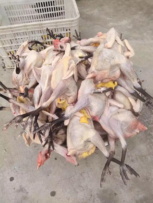 淘宝土鸡店复工即遭抢购,有人天天买一只,有人一口气买6只