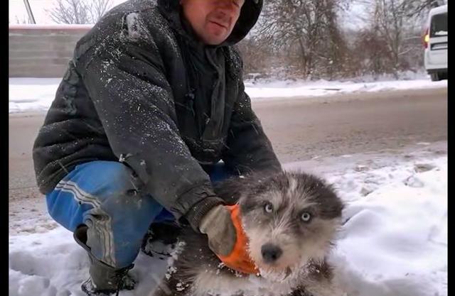 原创 极寒天气来临,狗妈为了孩子自动求助人类,用亲吻方式表达谢谢!