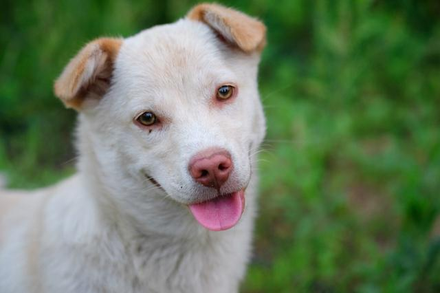 狗狗最希望你能对它做的7件事,你能准许吗?