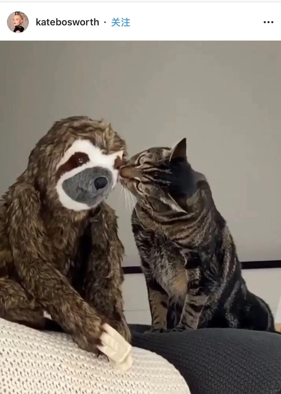全球隔离后,猫狗终于最先造反了!!!