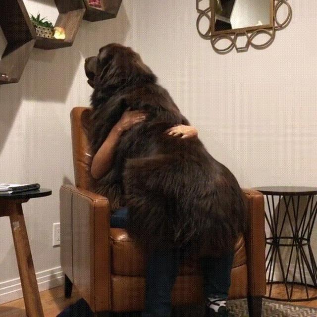 养了只大狗不是我的错,谁叫大狗太优异了
