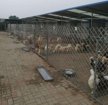 """""""救救这群可怜的狗狗们"""",面临强拆,几百条流浪狗即将无家可归..."""