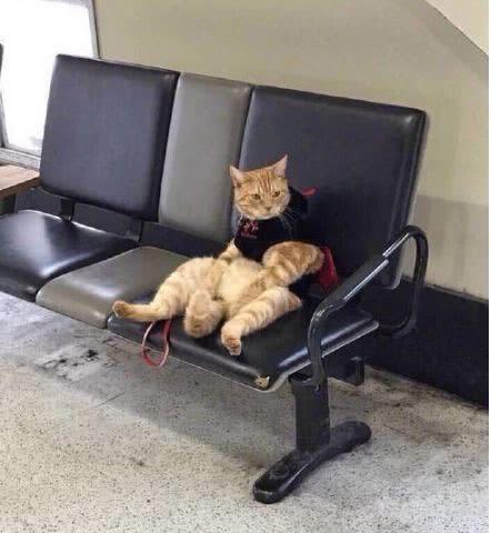 车站接到女友后却把猫咪忘了,在候车厅找到它时,直接笑翻了