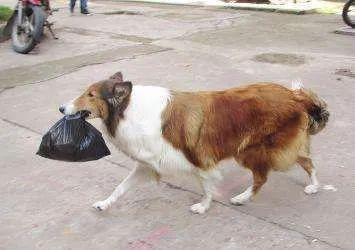 狗:我承受着我这个年数不应有的懂事!