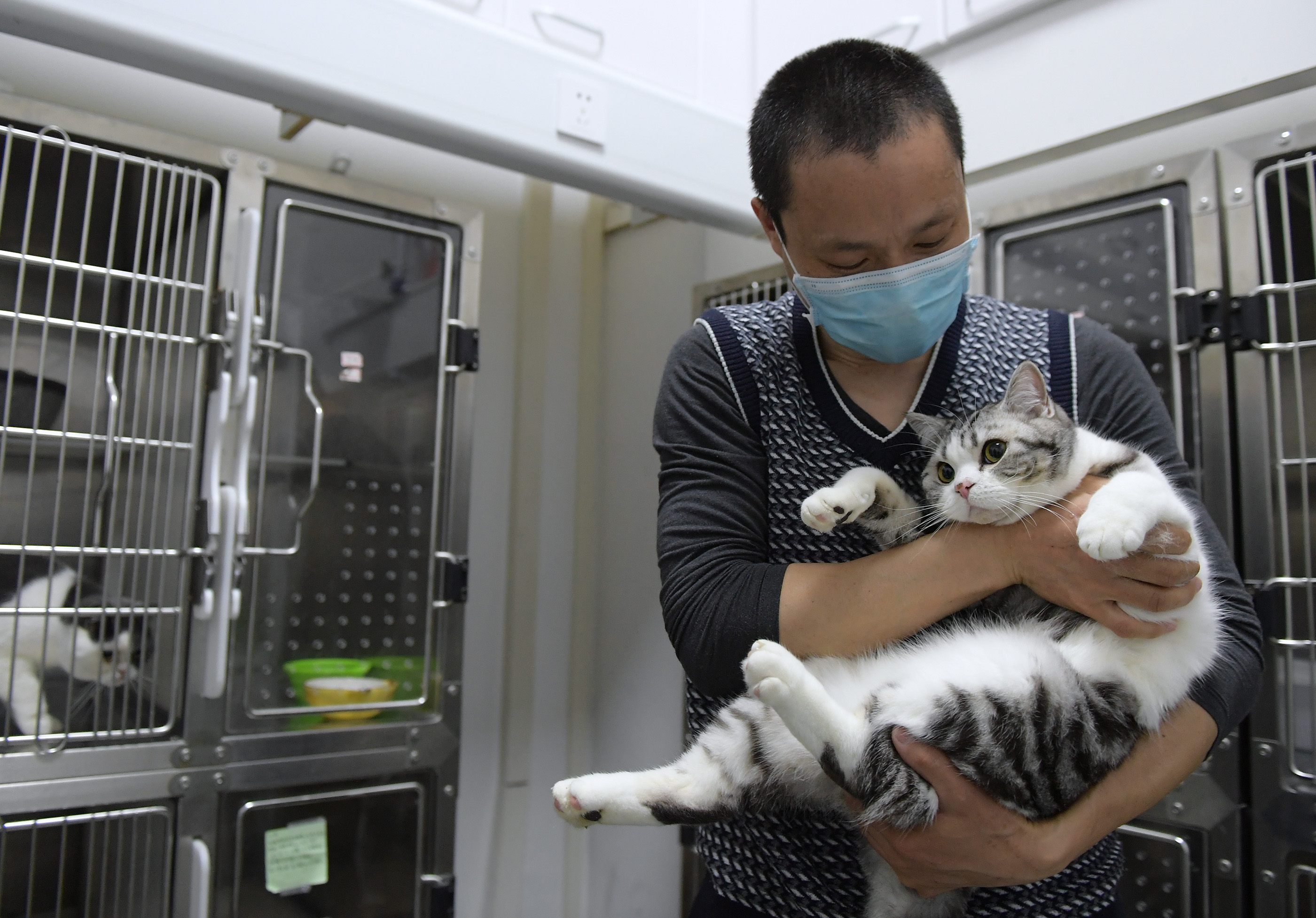 """武汉:动物医院里的暂且""""奶爸"""""""