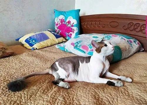 大火吞噬公寓,主人险死于一氧化碳中毒,多亏了猫咪这招!