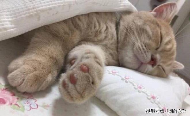原创 养猫不需要买猫窝,由于猫咪最爱睡觉的地方不是猫窝