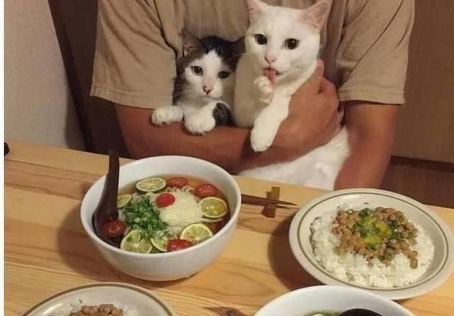 两只猫咪为了吃的,竟然对主人祭出撒娇大法,不比女明星的差