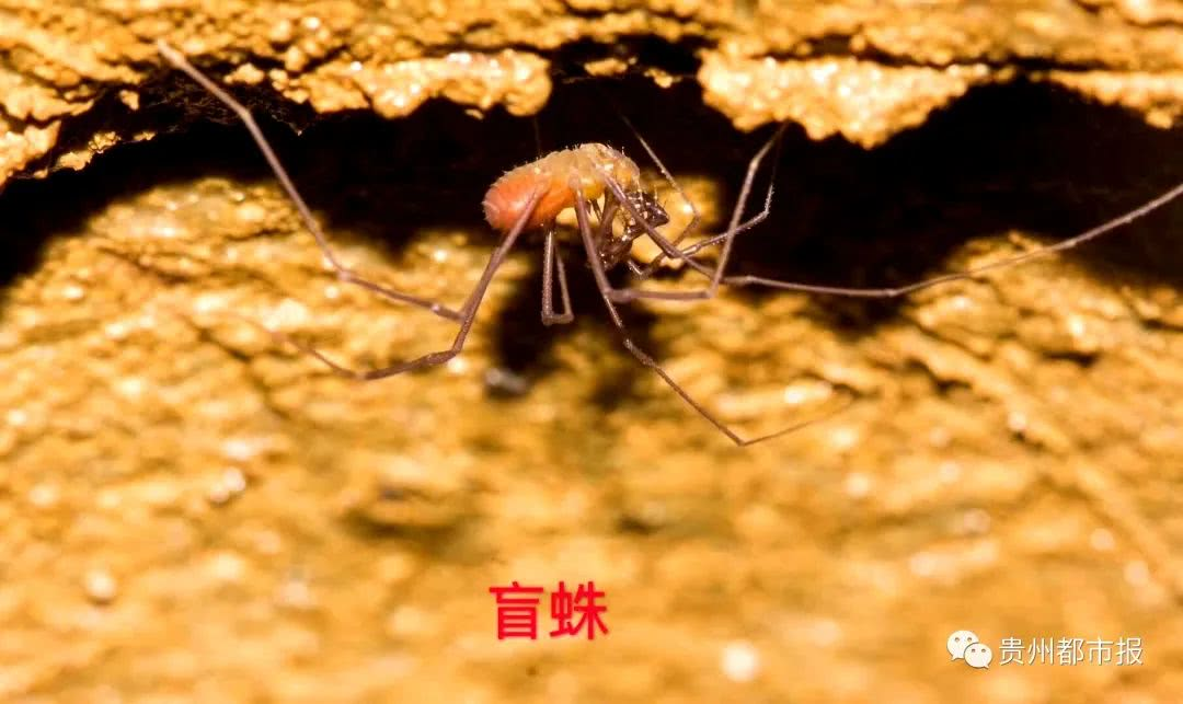 贵阳一探险队在地下窟窿里发现神秘的动物天下