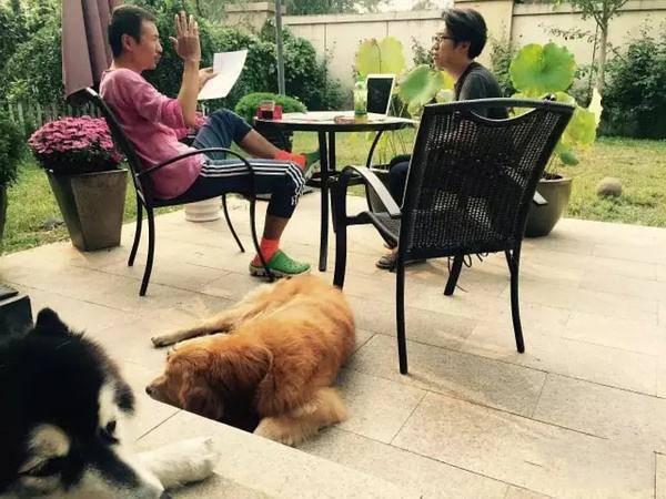 """朴树:""""没有狗的家是不完整的"""""""
