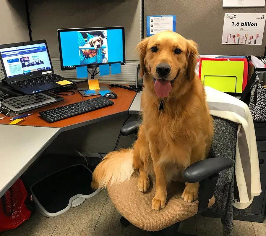 你愿意上班的时刻有宠物陪同吗?